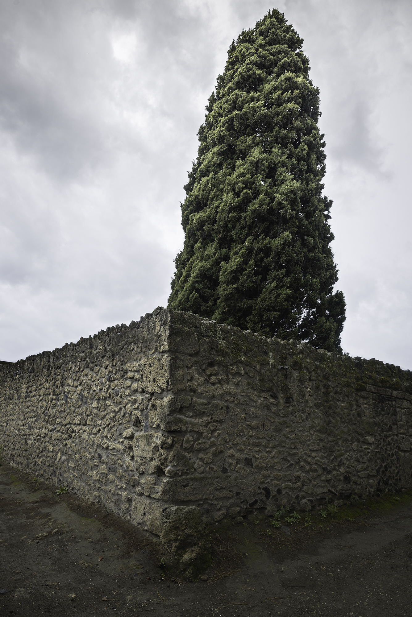 Pompeii Tree and Wall