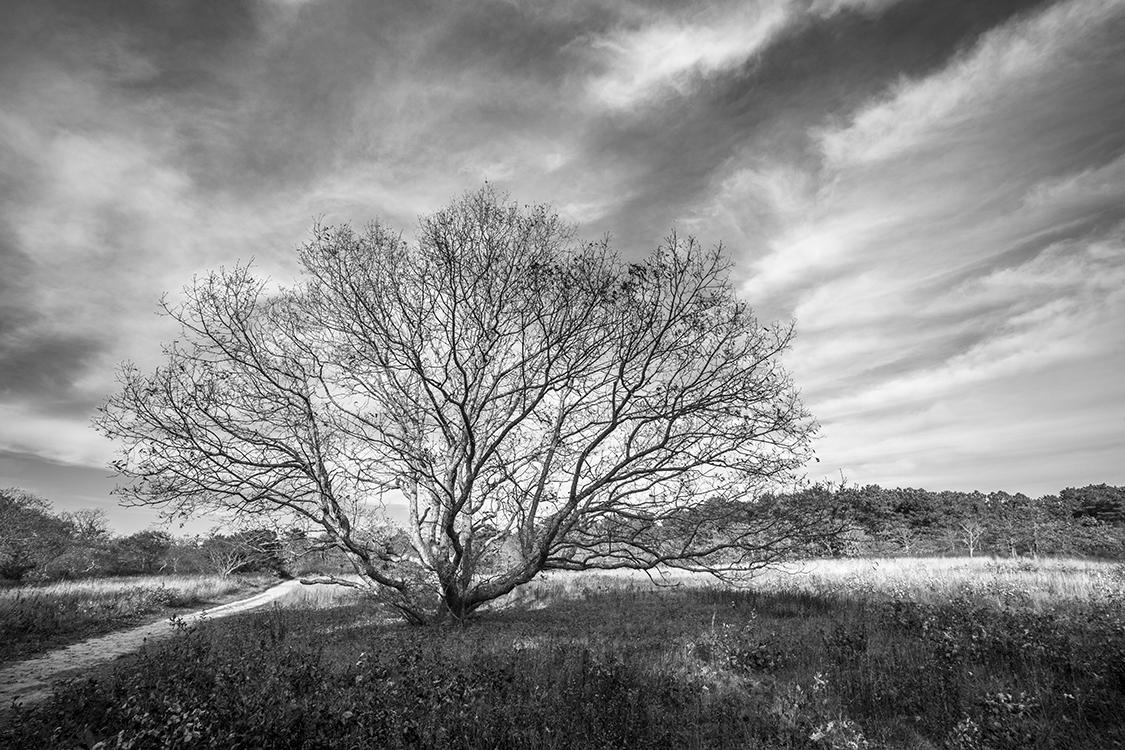Sepiessa Solo Tree
