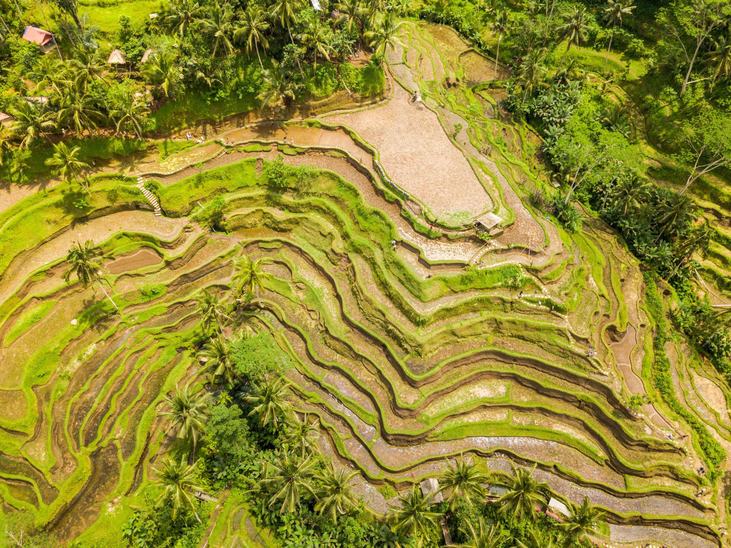 Ubud Ricefields Drone Photos-079.jpg