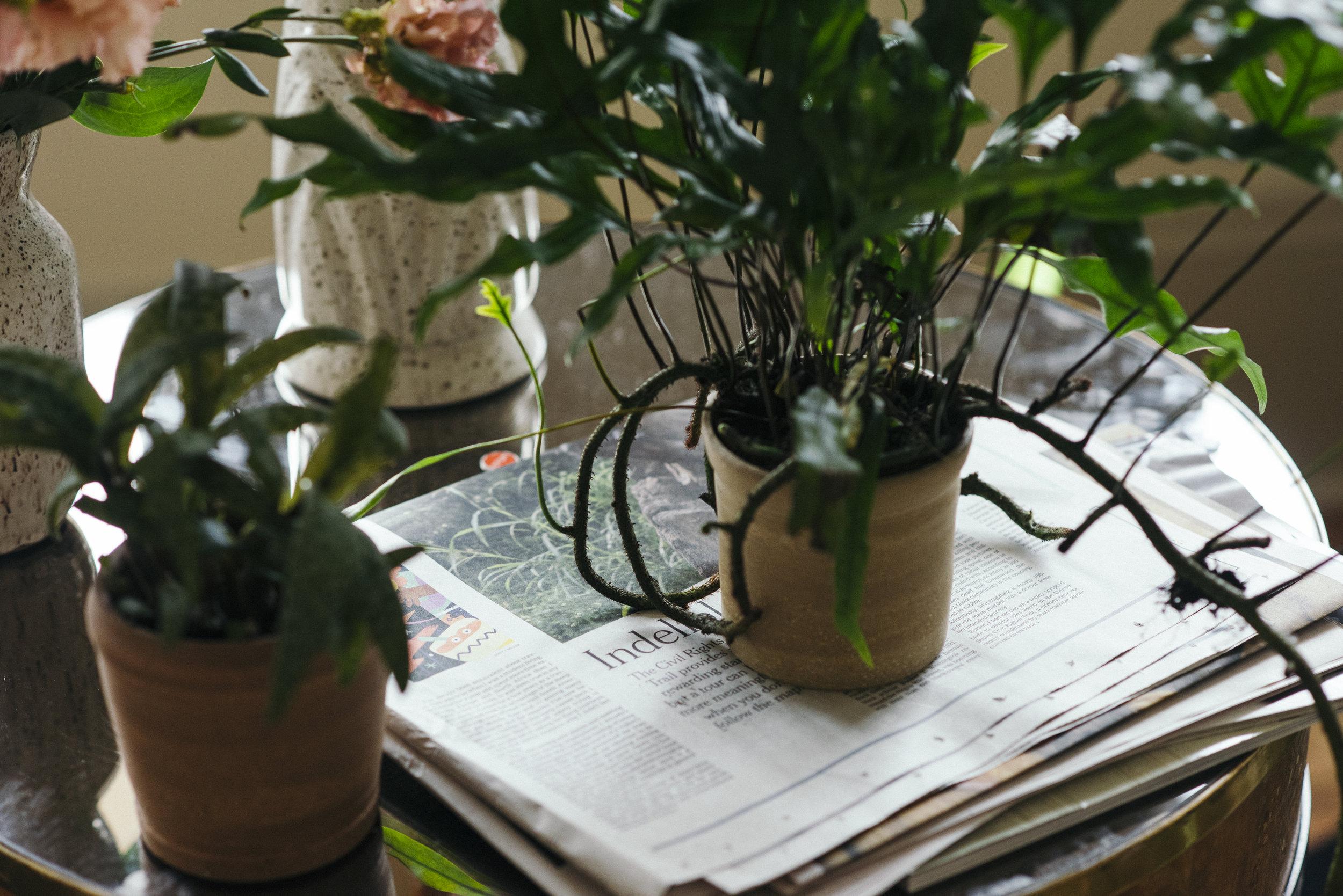 TINY_NEST_INTERIOR_PLANTS_NEW_ORLEANS-2.jpg