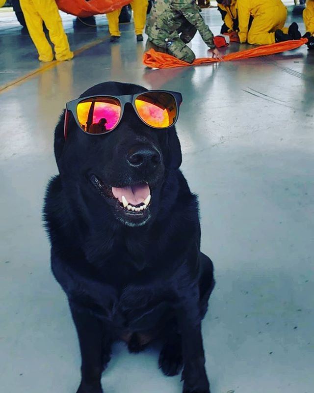 That moment when you put on your first pair of Blade Shades...😎🏒 — #cutepuppy #puppylove #isitoctoberyet #dogg #dogoftheday #nhl #hockeyislife