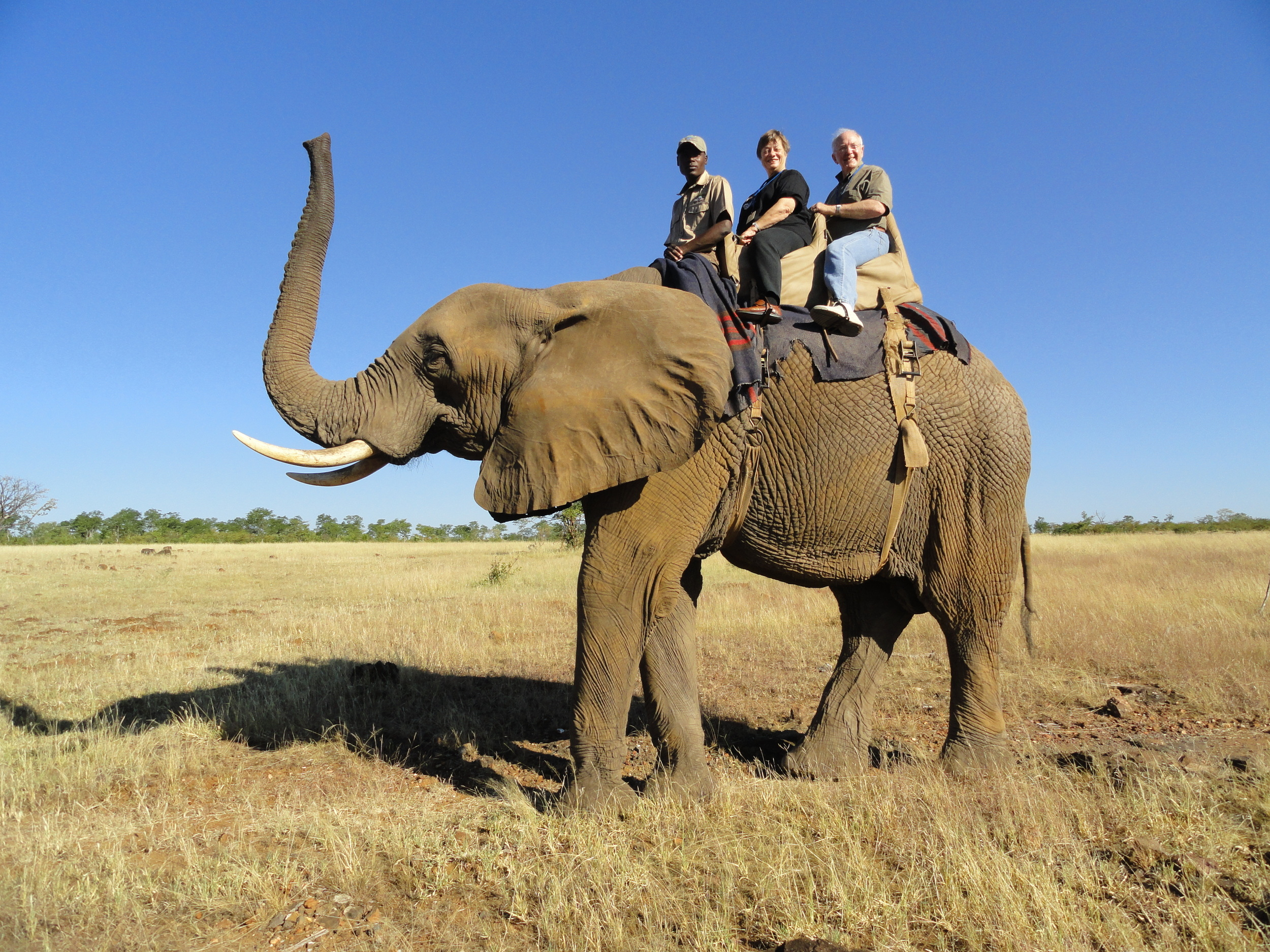 The Hammers riding an elephant on an African safari
