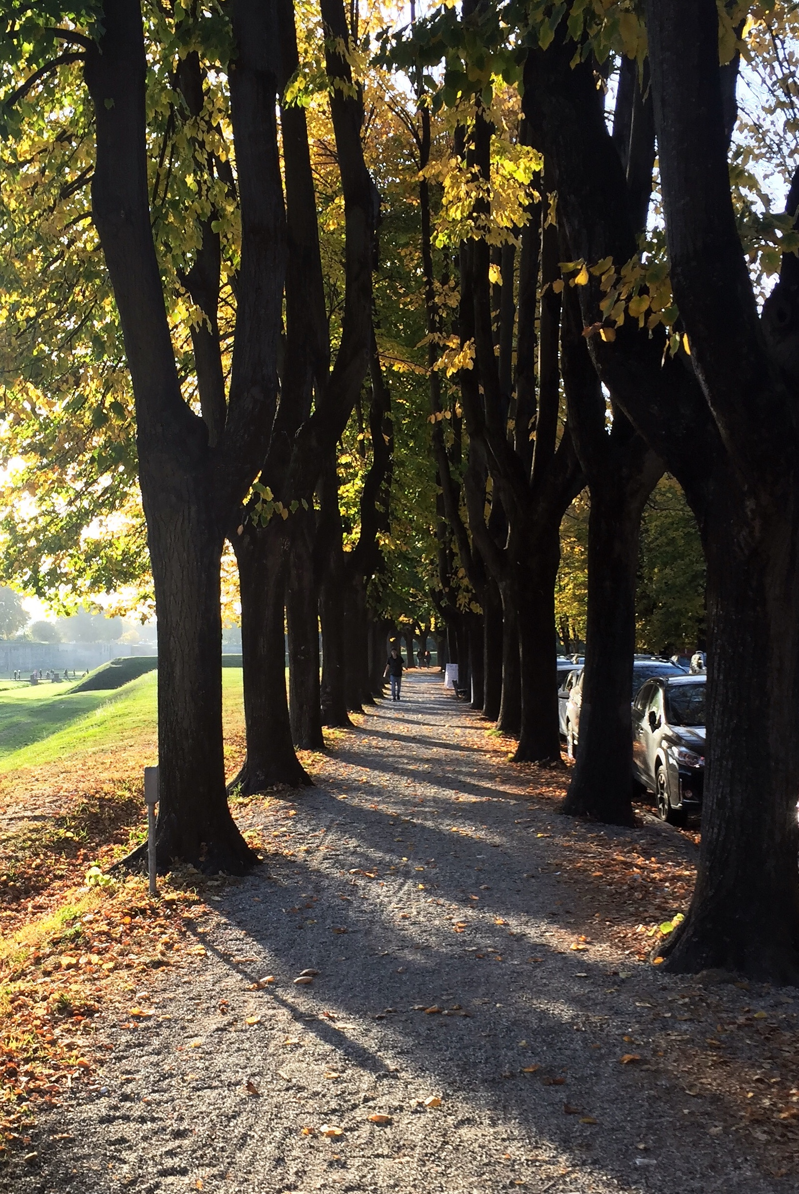 Fall sunlight in the nearby town of Lucca.