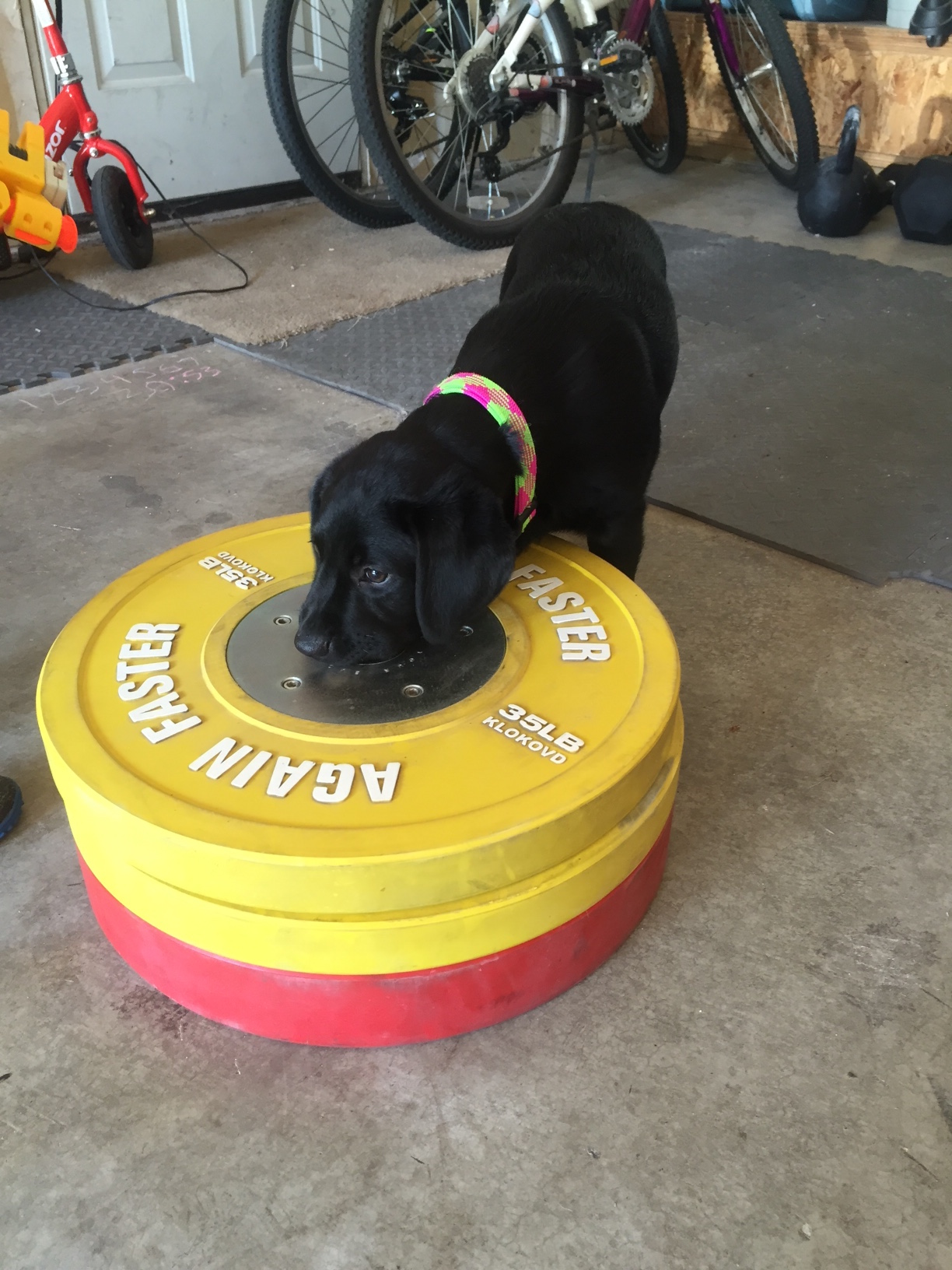 Lani loves bumper plates.  She says it's time to clang-n-bang!
