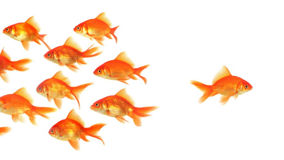 fish-groupthink.jpg