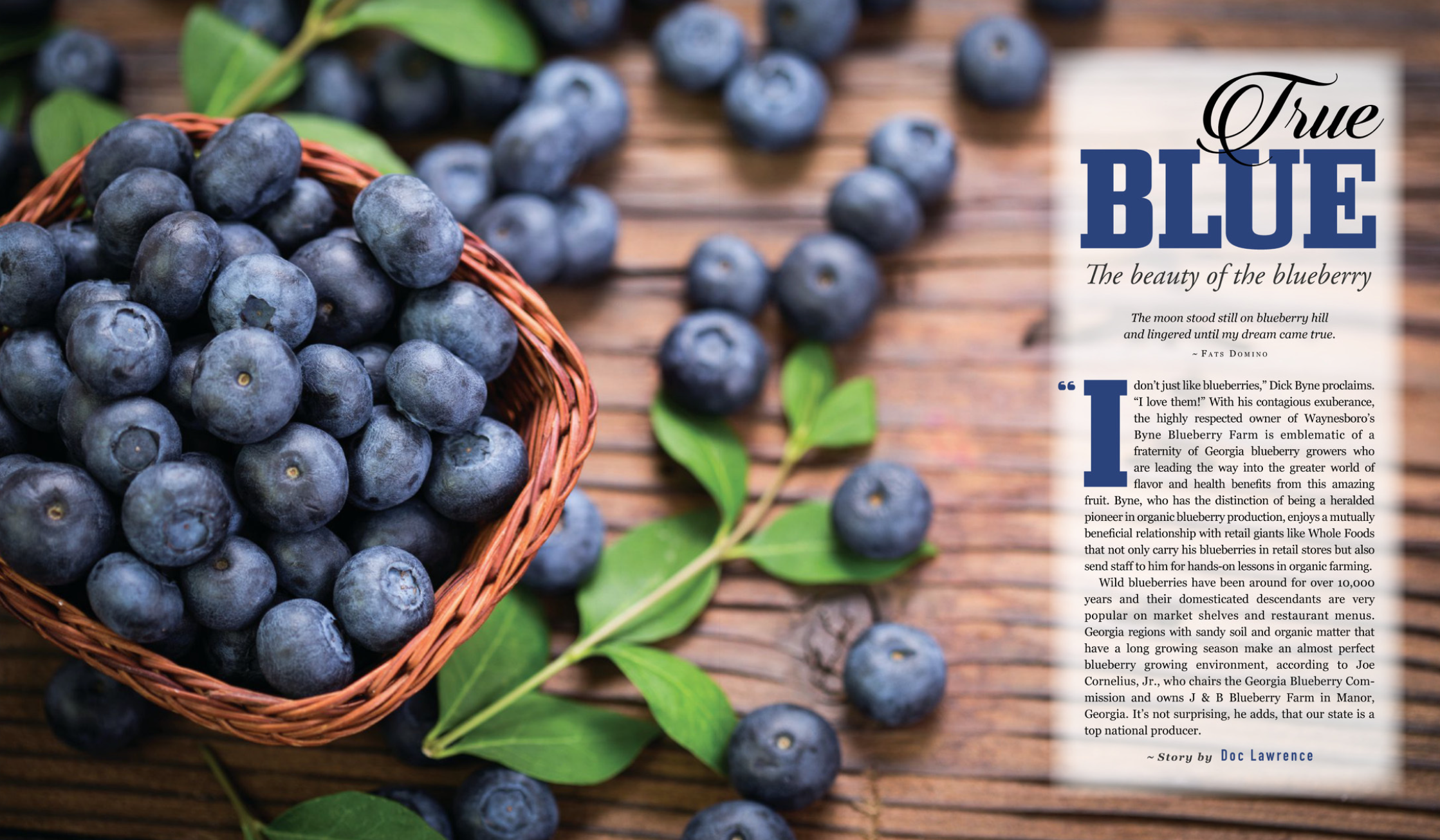 Blueberries are loaded with health benefits. They are a major part of Georgia's agricultural production and are wildly popular with cooks and bakers. Organic blueberries? Yes, indeed. Blueberry wine? Delicious. You pick 'em? Pure fun. Enjoy the story and the original recipes in the  new edition of Georgia Connector .