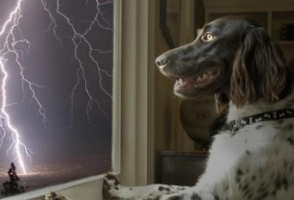 Dog Thunder.jpg