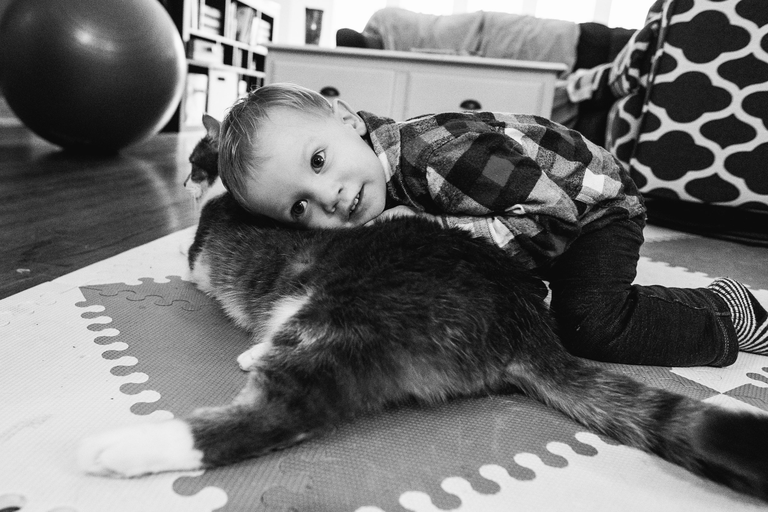 Toddler hugging cat. Metro Detroit Documentary Family Photographer