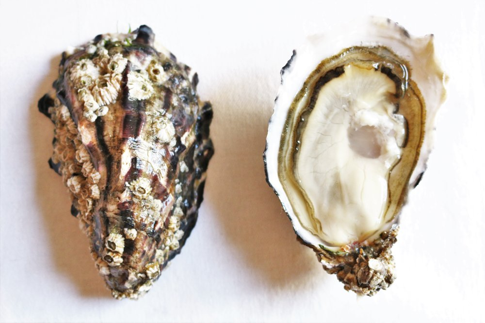 The Art of the Shuck