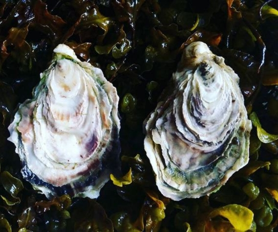 Isle of Barra Rock Oysters