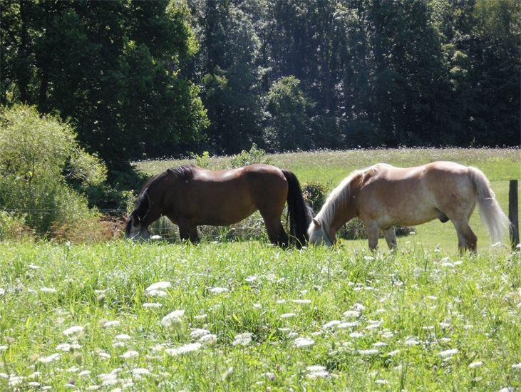 twohorses.jpg
