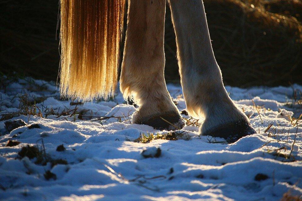 horse-1157932_960_720.jpg