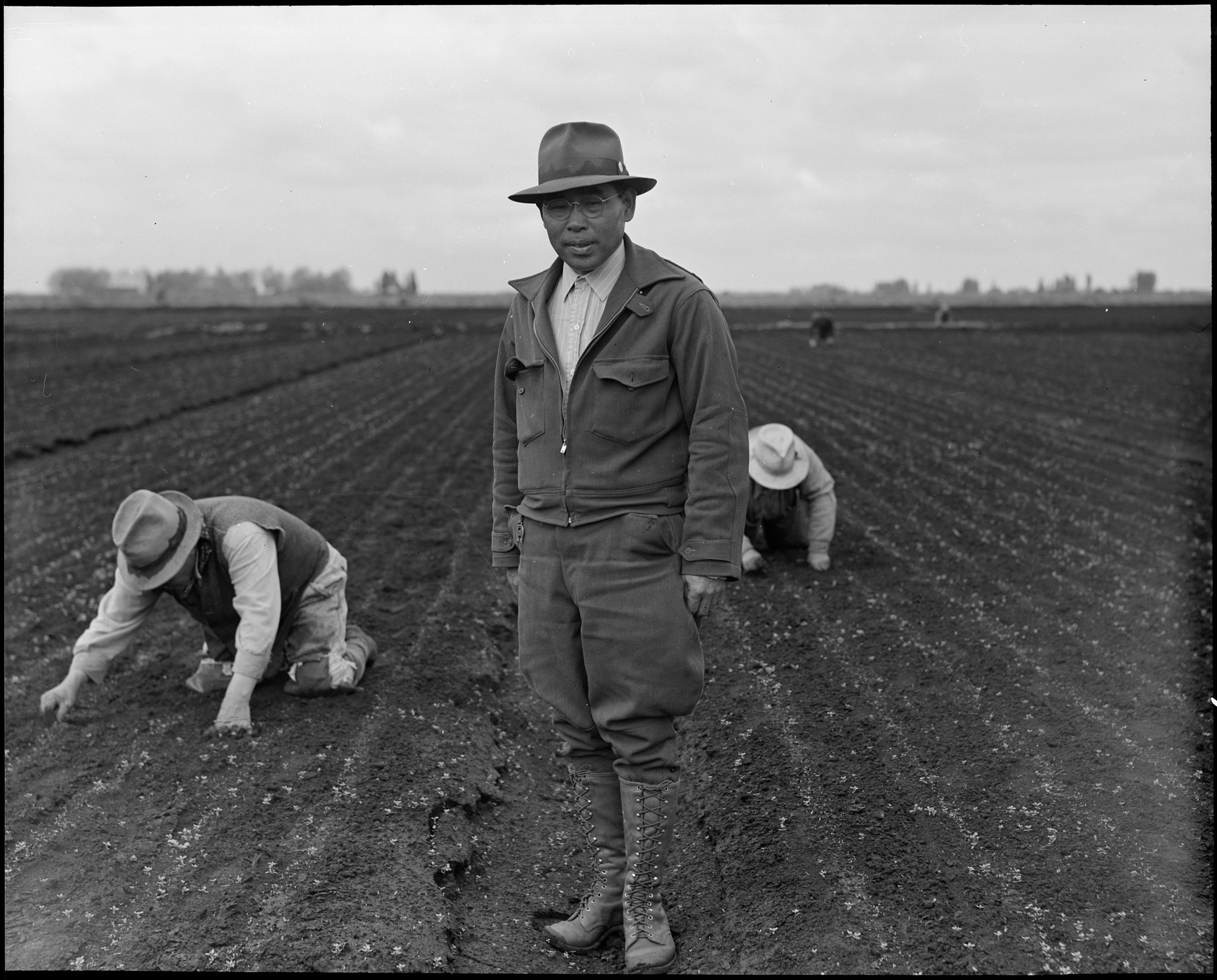 Stockton, California. Weeding celery field in the Delta region, prior to evacuation. Henry Futamachi, ranch manager, in foreground. Farmers and other evacuees of Japanese ancestry will be given opportunities to follow their callings in War Relocation Authority centers where they will spend the duration.