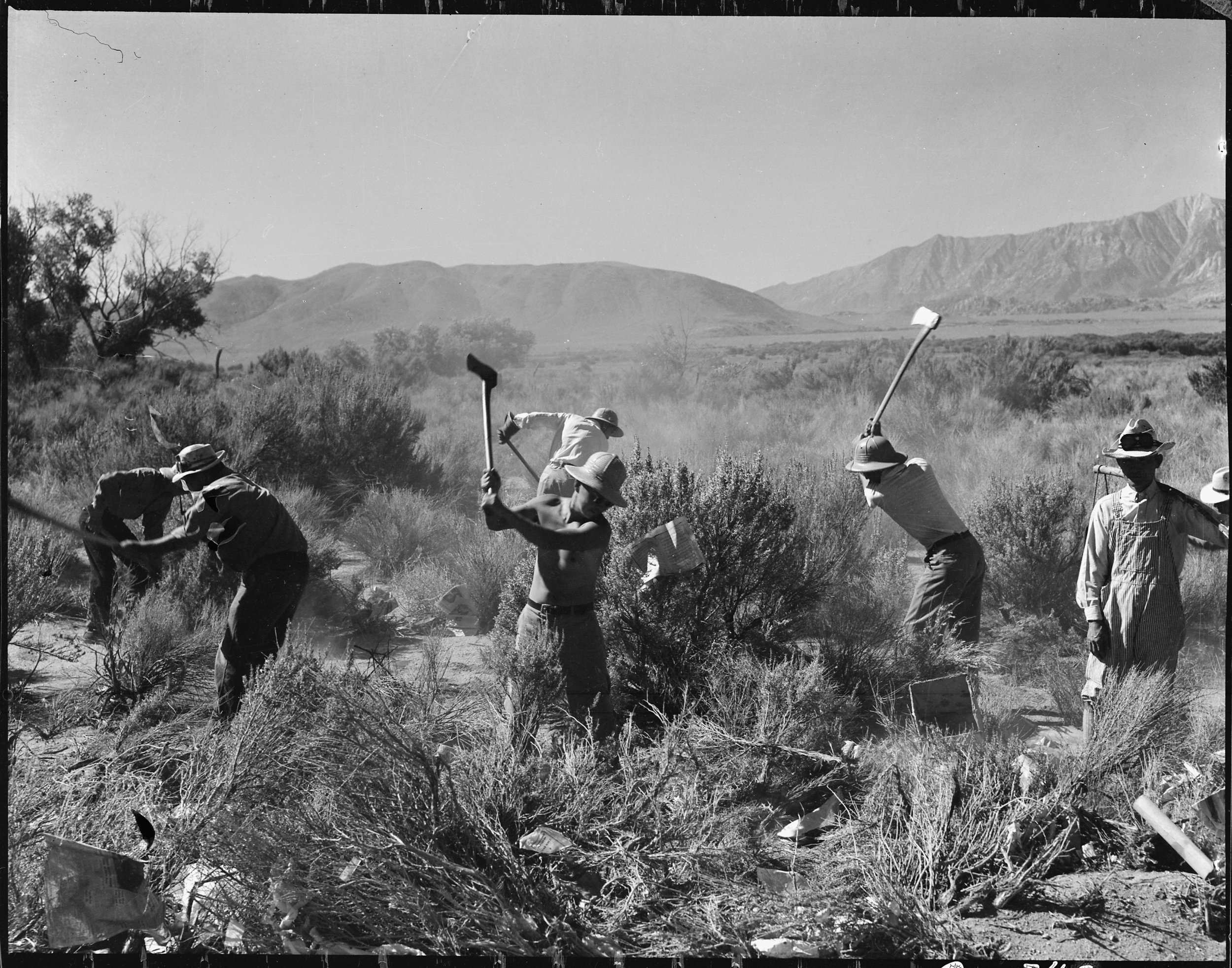 June 30, 1942 — Manzanar Relocation Center, Manzanar, California. More land is being cleared of sage brush at the southern end of the project to enlarge this War Relocation Authority center for evacuees of Japanese ancestry.