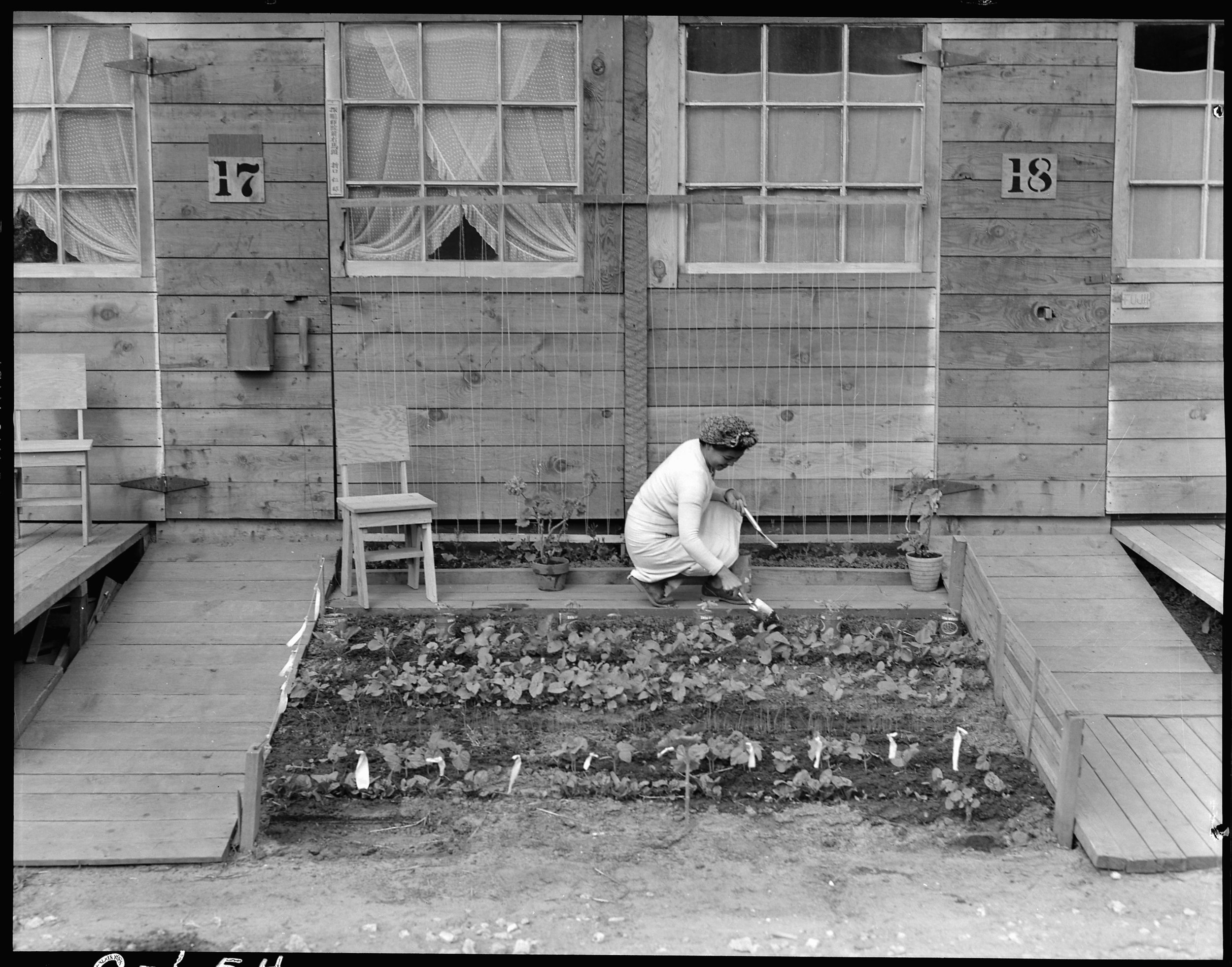 San Bruno, California. Mrs. Fujita working in her tiny vegetable garden she has planted in front of her barrack home at this assembly center.