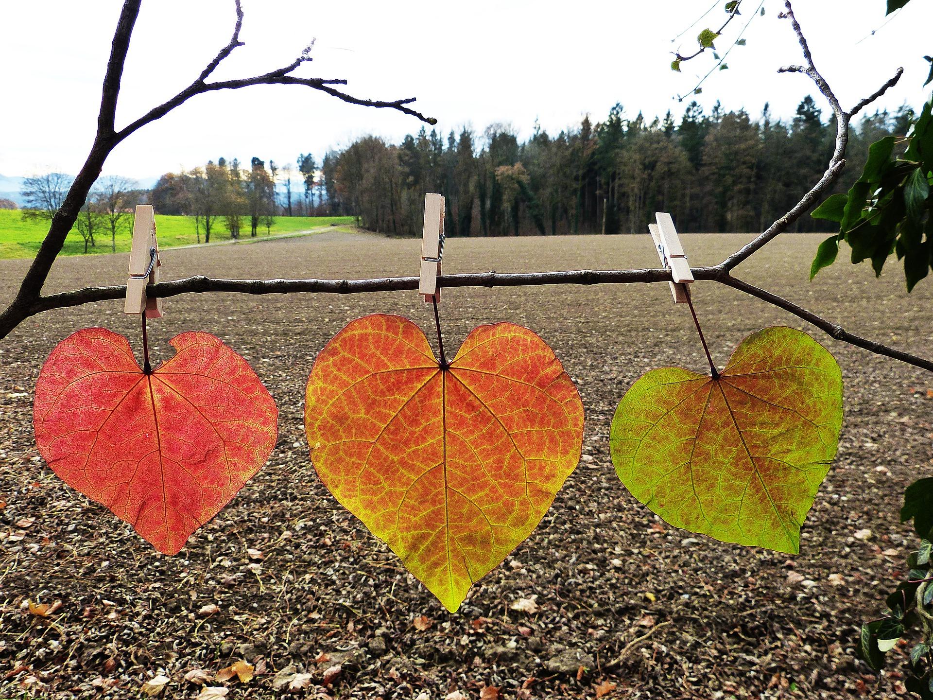 leaves-1849833_1920.jpg