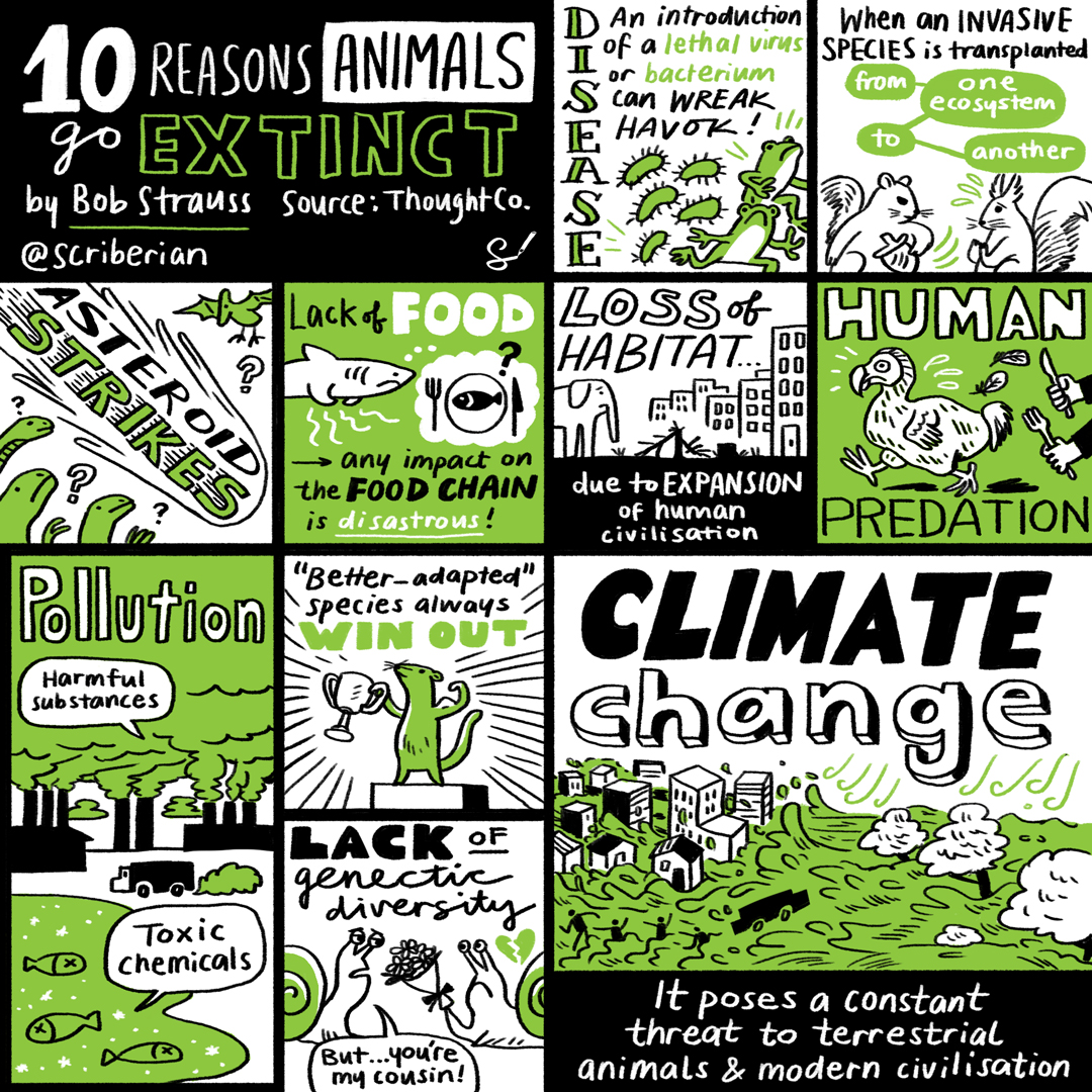 The 10 reasons animals go extinct, by Bob Strauss. Source:  ThoughtCo.