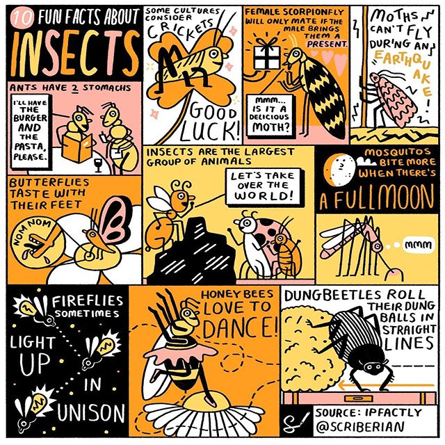 Female scorpion fly will only mate if the male brings them a present. Amazing #insect facts from @IPFactly (rendered into #sketchnote by us). #drawing #illustration #funfacts #insects #bees #infographic #design