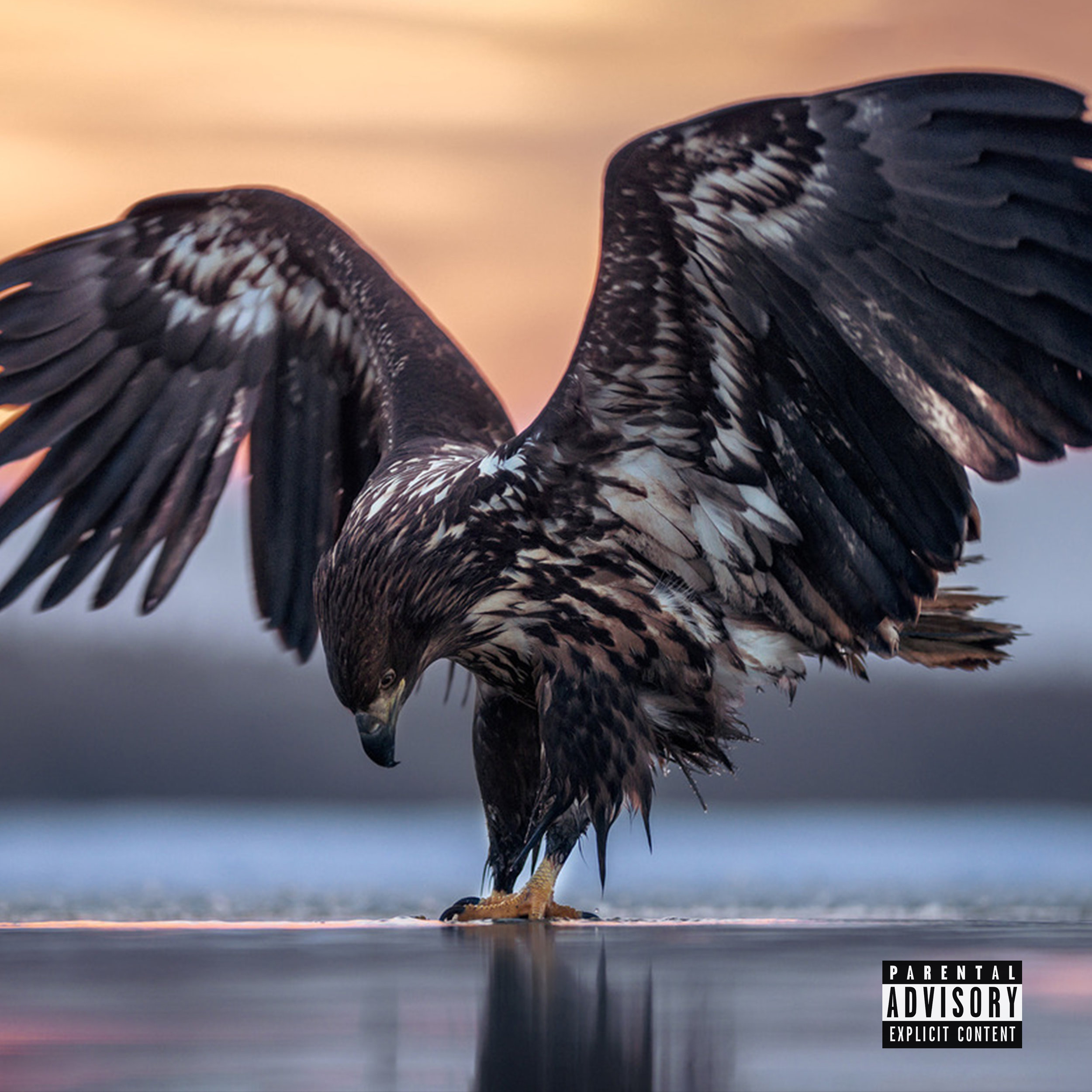 Soar Cover Art.jpeg