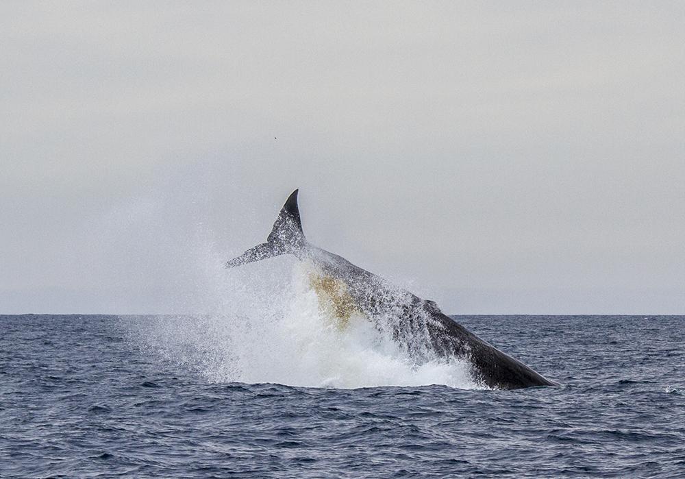 Whale4.jpg