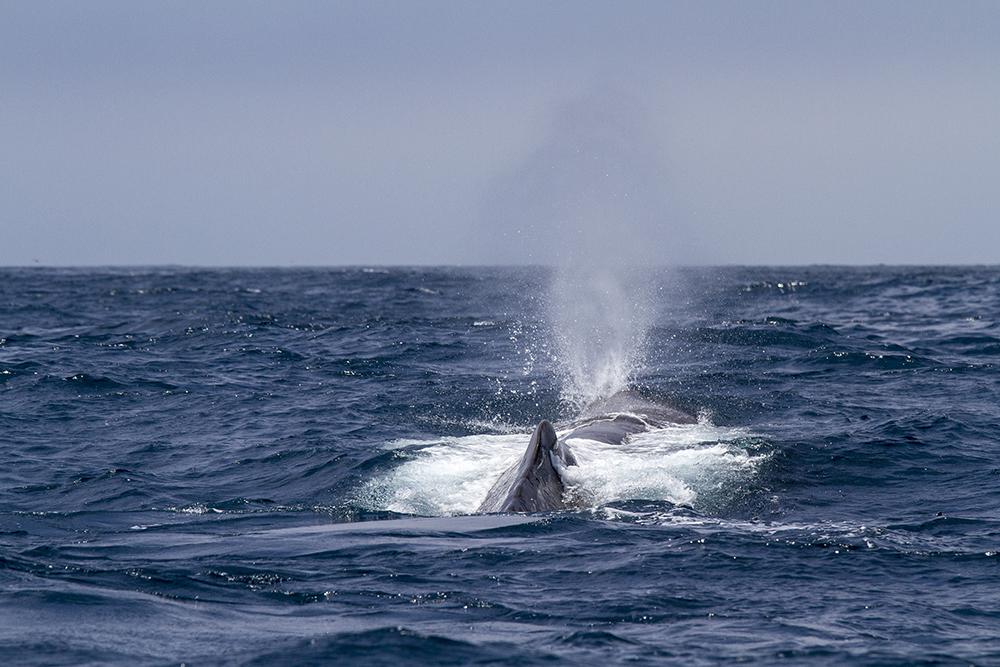 Whale9.jpg