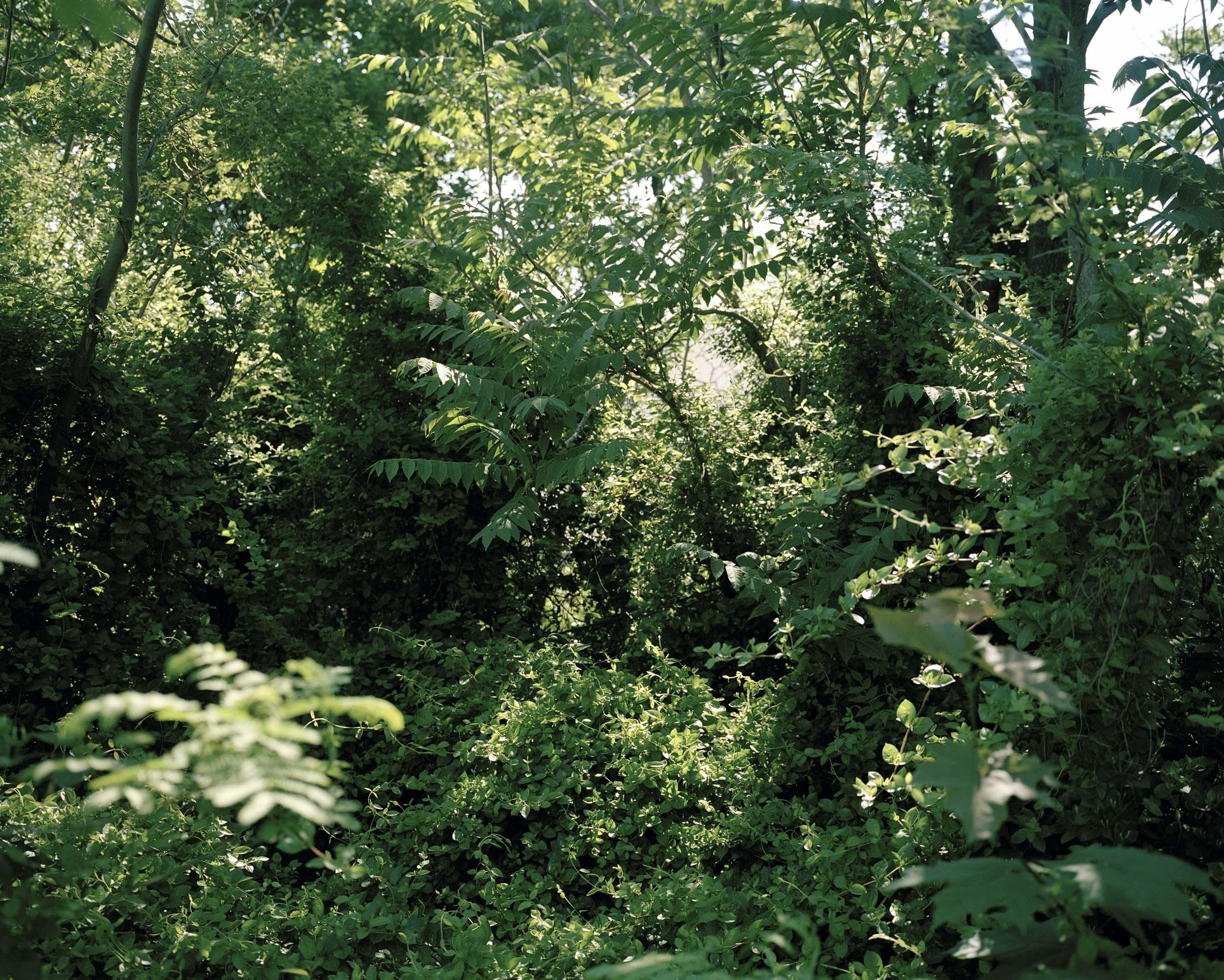 14_lush_foliage_01.jpg