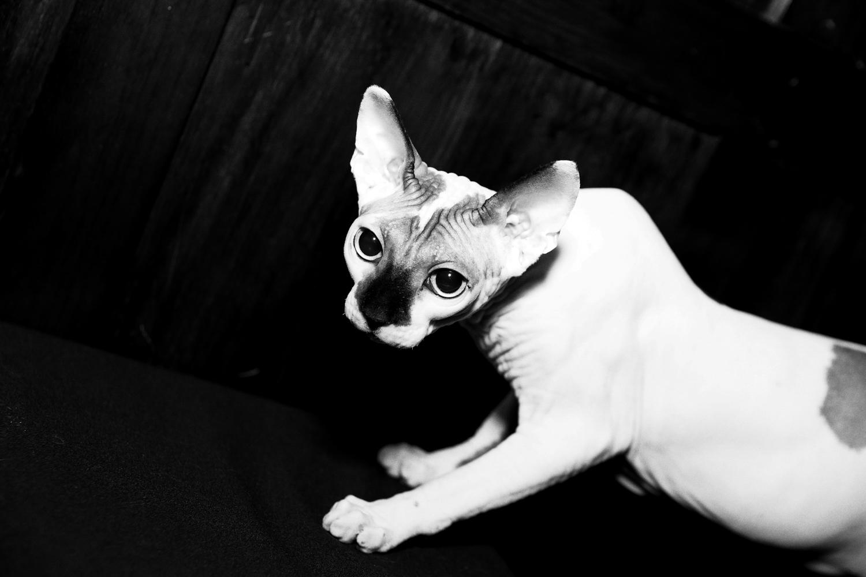14_Cat_People-Julius-Motal-35.jpg