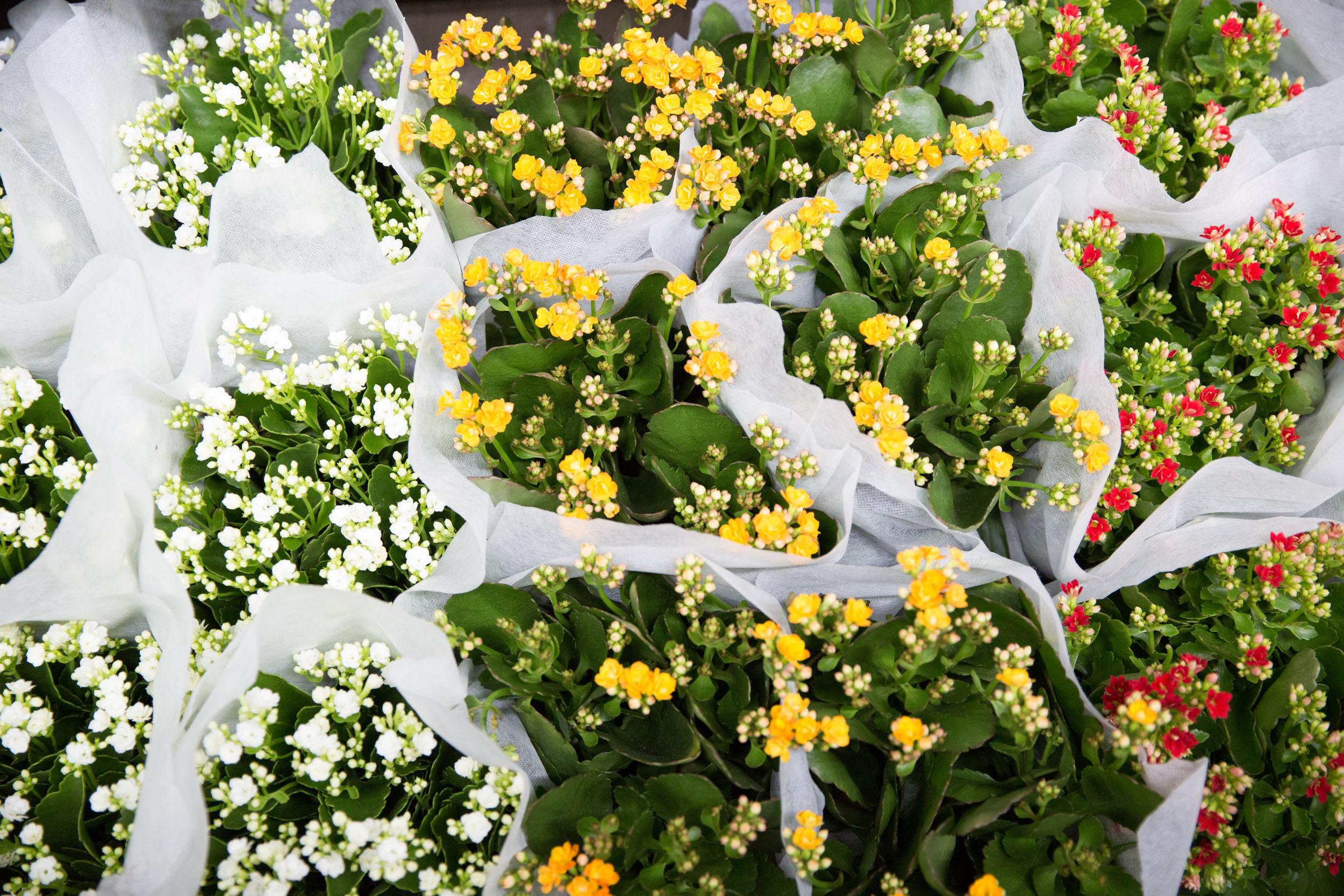 08_NewestYork_081718_FlowerDistrict-14.jpg