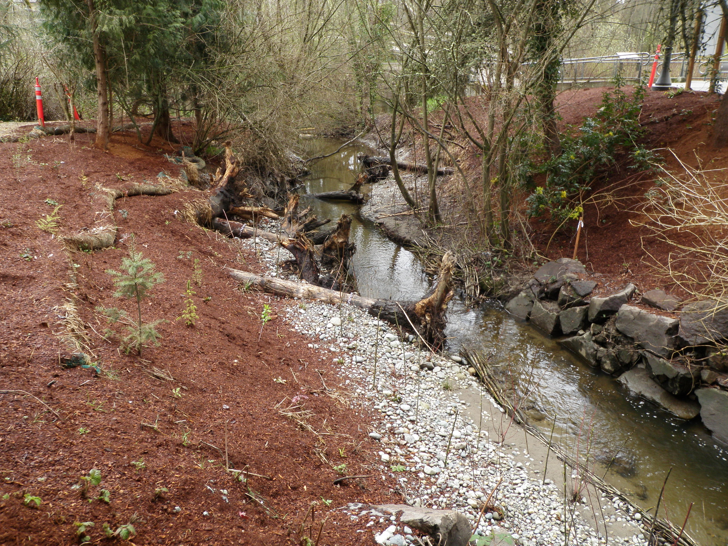 Restored Horse Creek Channel.jpg