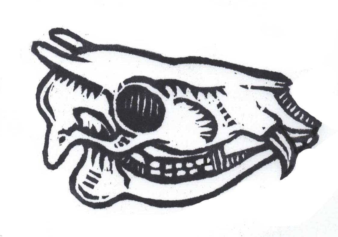 Tufted deer skull