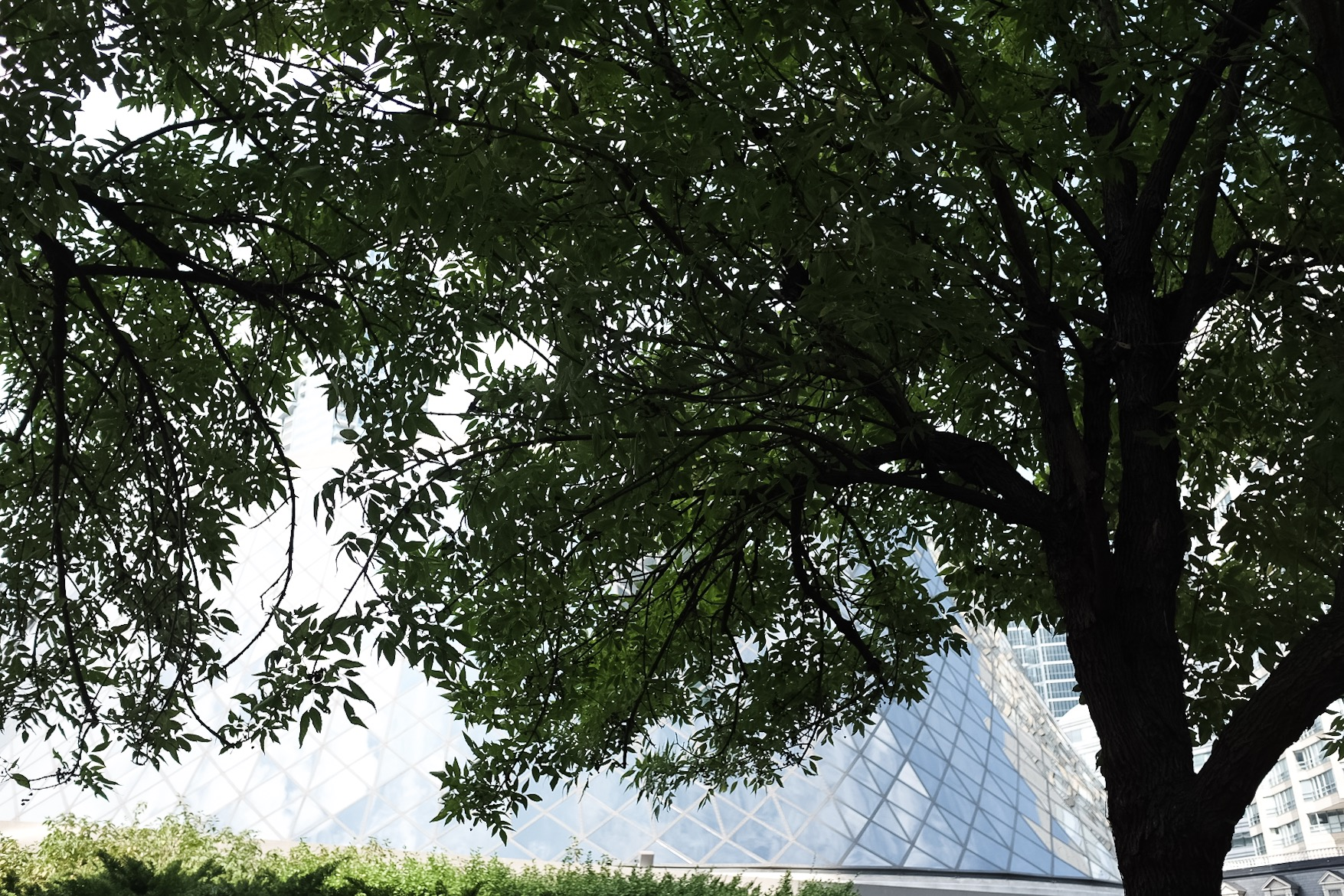 Hidden behind the tree is Roy Thompson Hall, one of the main venues for the festival and one of the iconic buildings in Toronto.