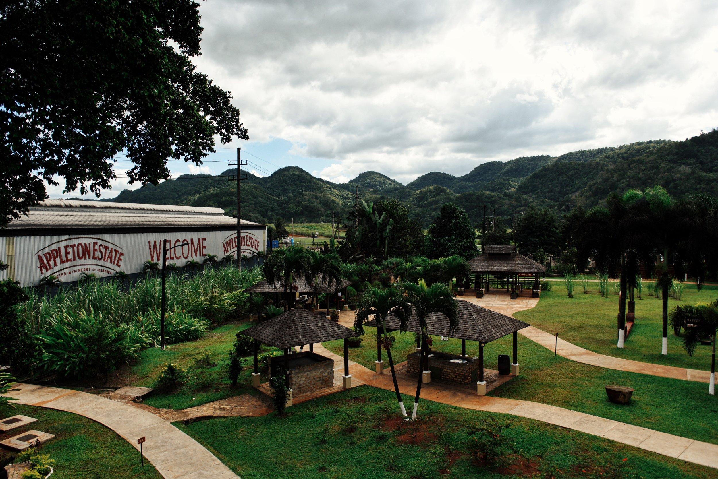 Appleton estate Jamaica