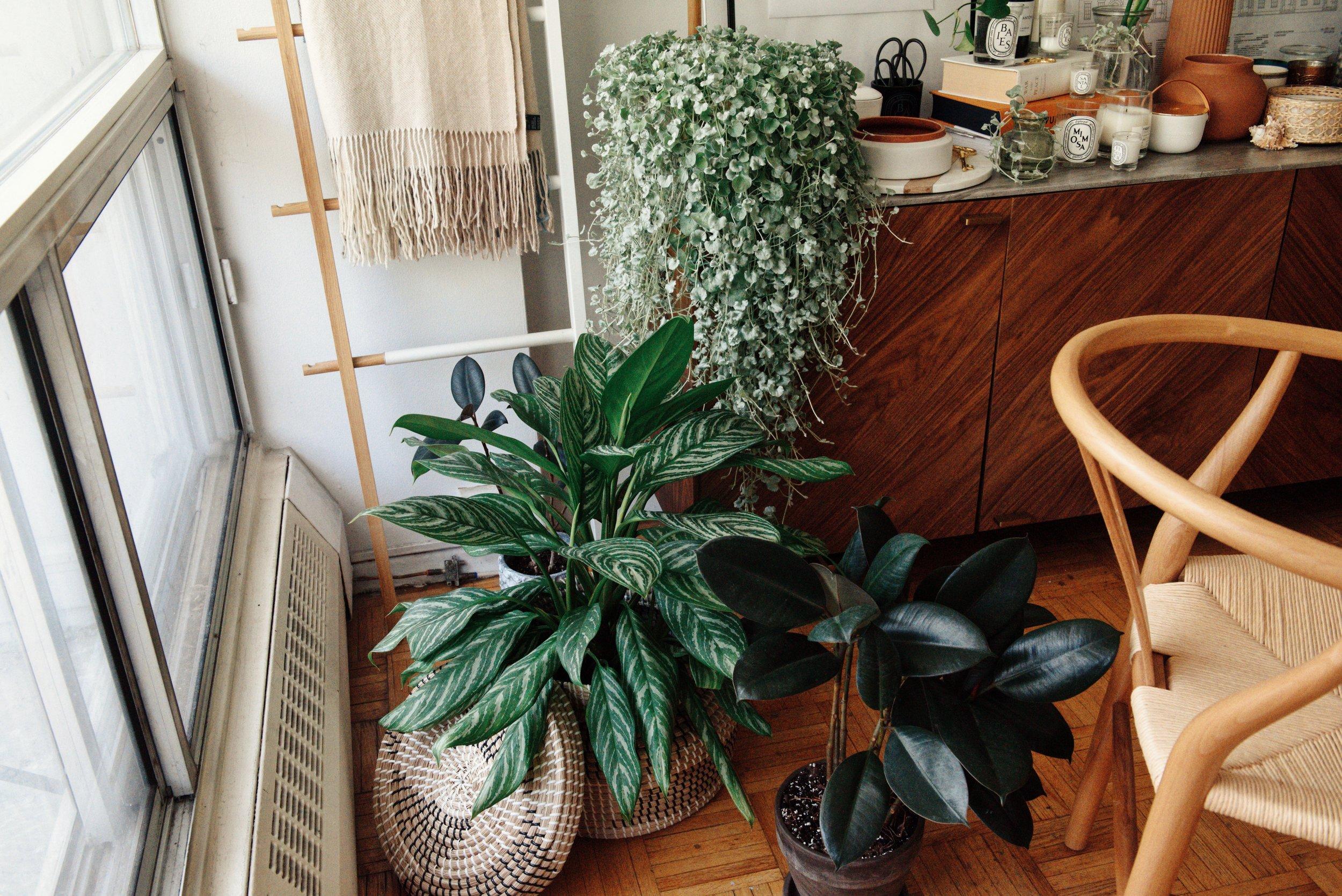 structube plants