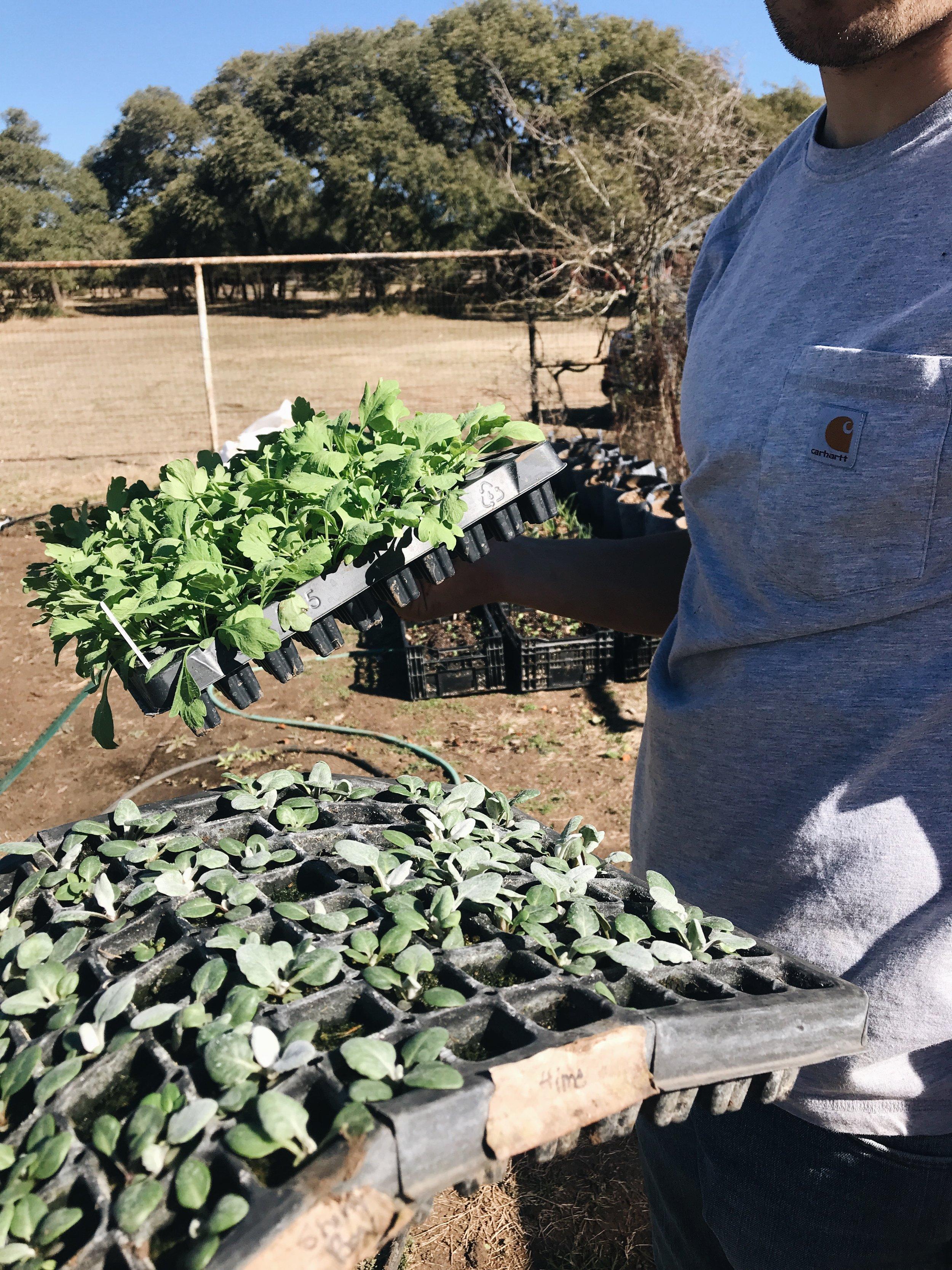Garden Update - The Farmer & I