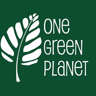 One Green Planet Articles