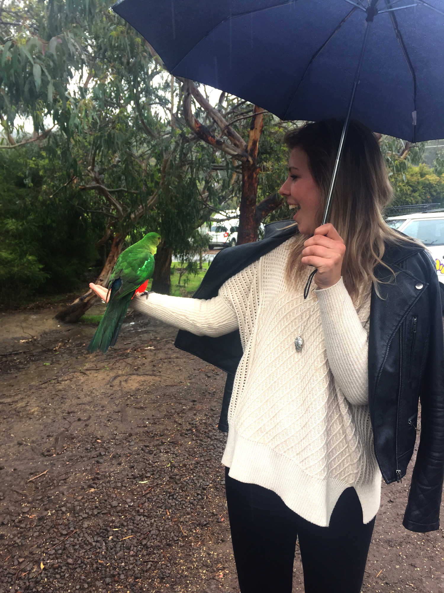 Great Ocean Road - Parrot