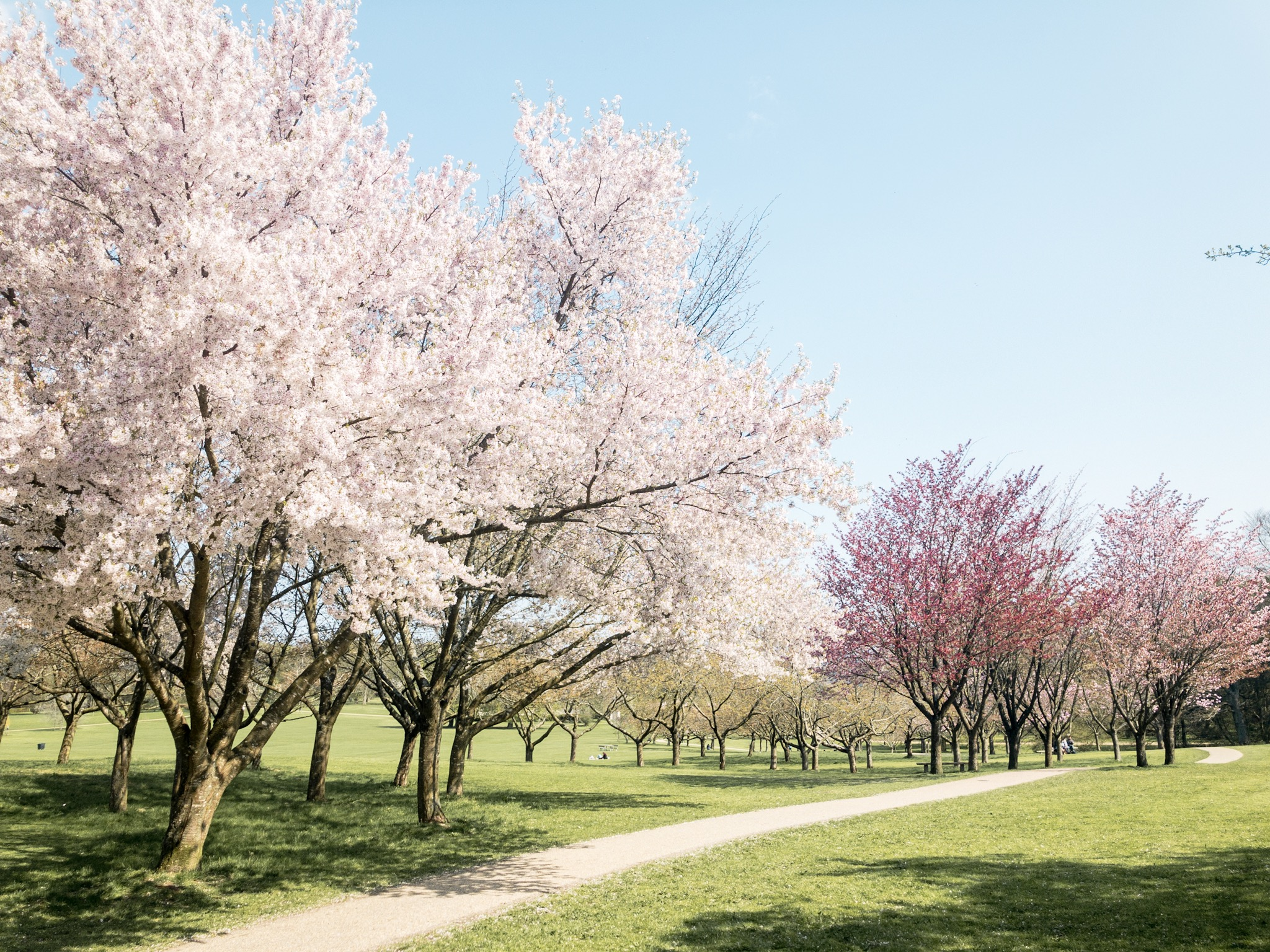 The beautiful grounds near Marselisborg Palace, Denmark in Spring