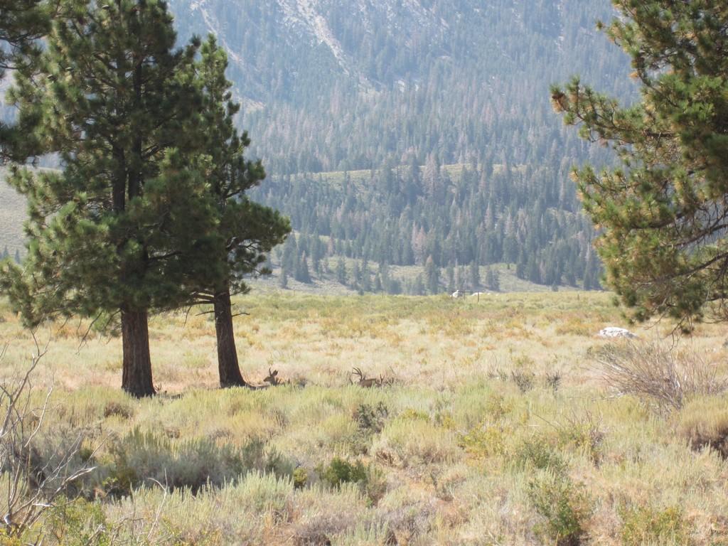 Sherwin Range (2).jpg