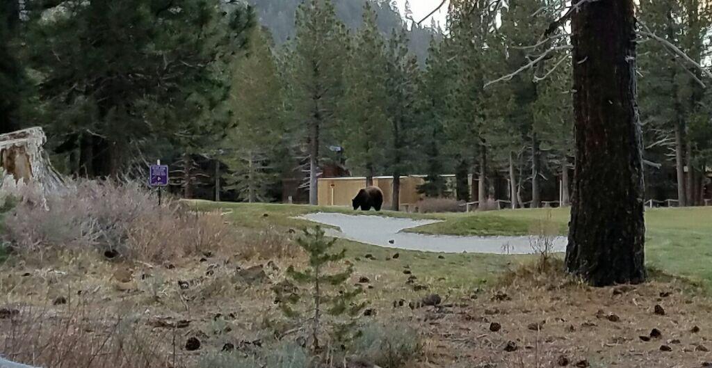 Black Bear26.jpg