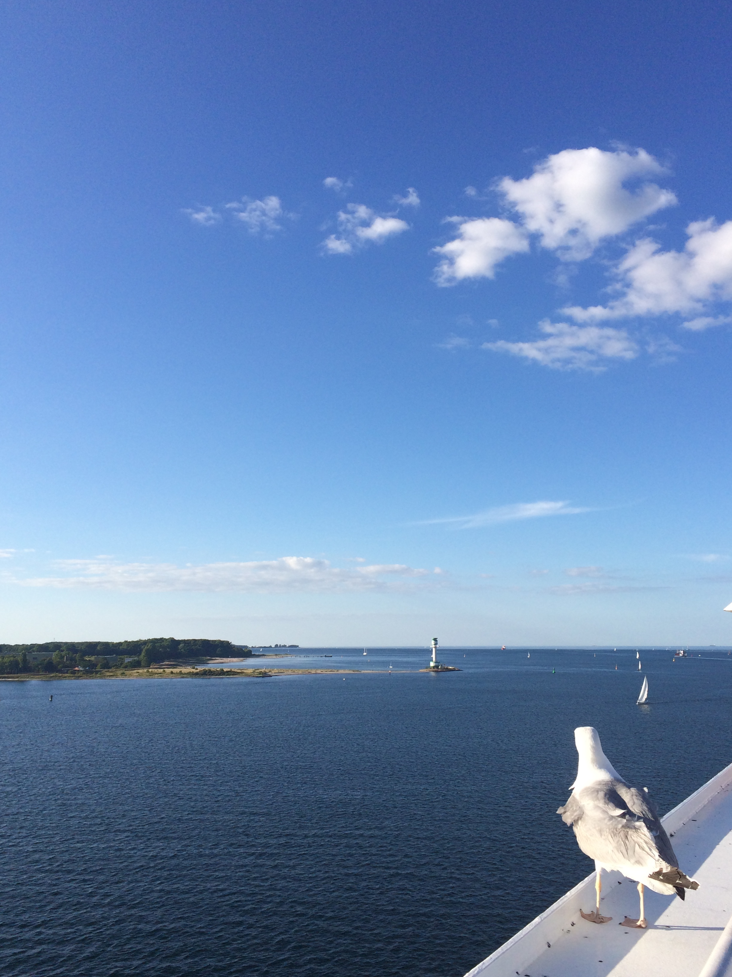 A seagull enjoying the view of the Kiel Förde on the Kiel-Göteborg ferry, before heading out into the open Baltic.