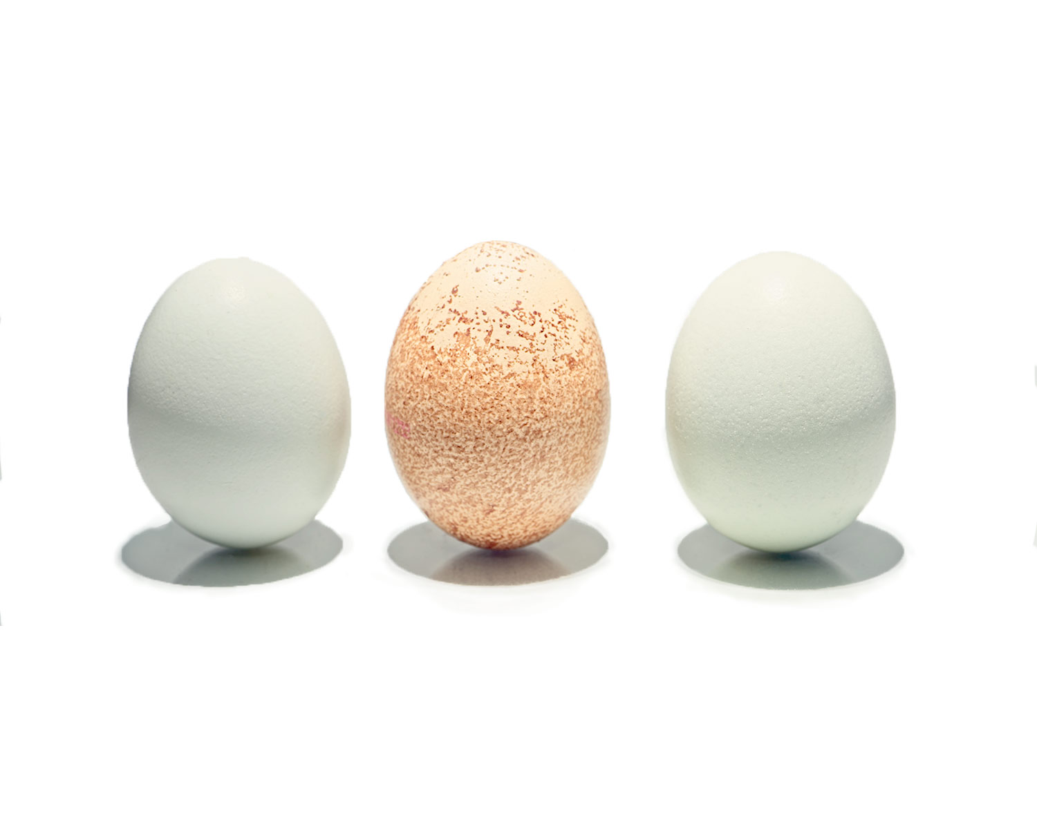 Eggs-Inight.jpg
