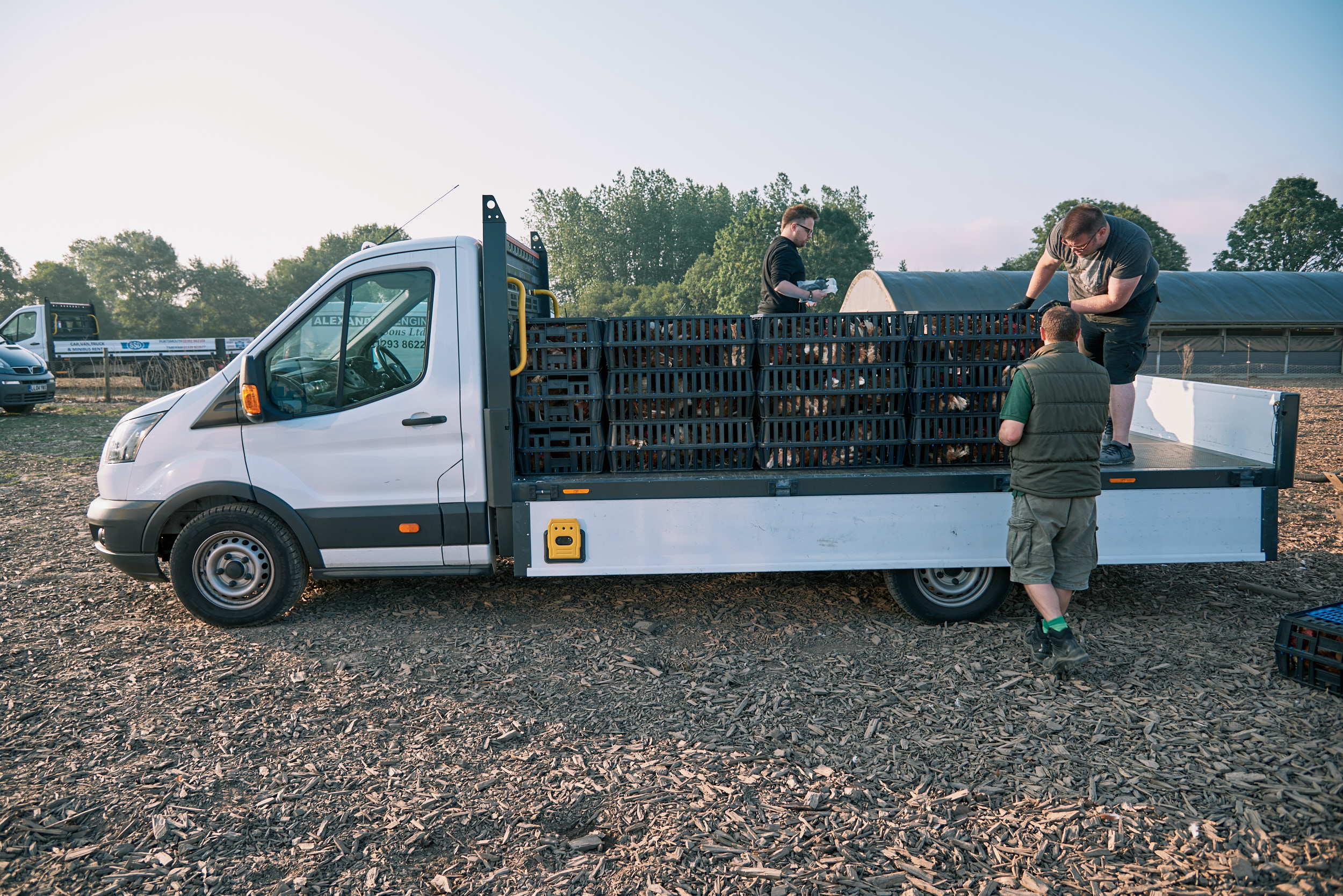 rookery-farm-organic-eggs-FSFH-rehoming27.jpg