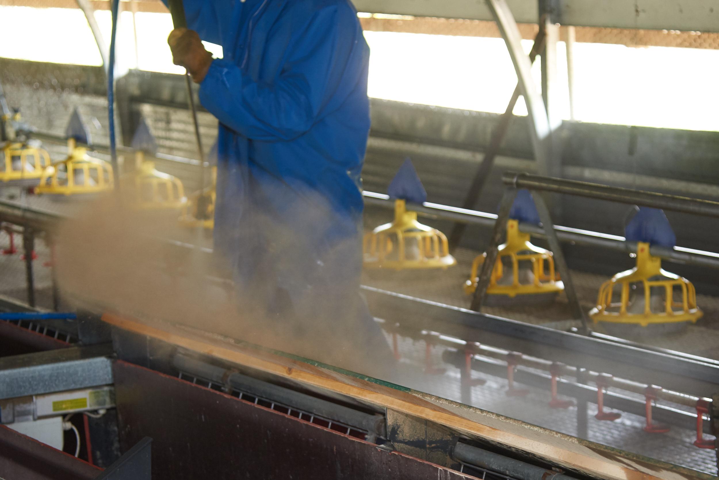 Rookery-Farm-Organic-Eggs-Housekeeping!_013.jpg