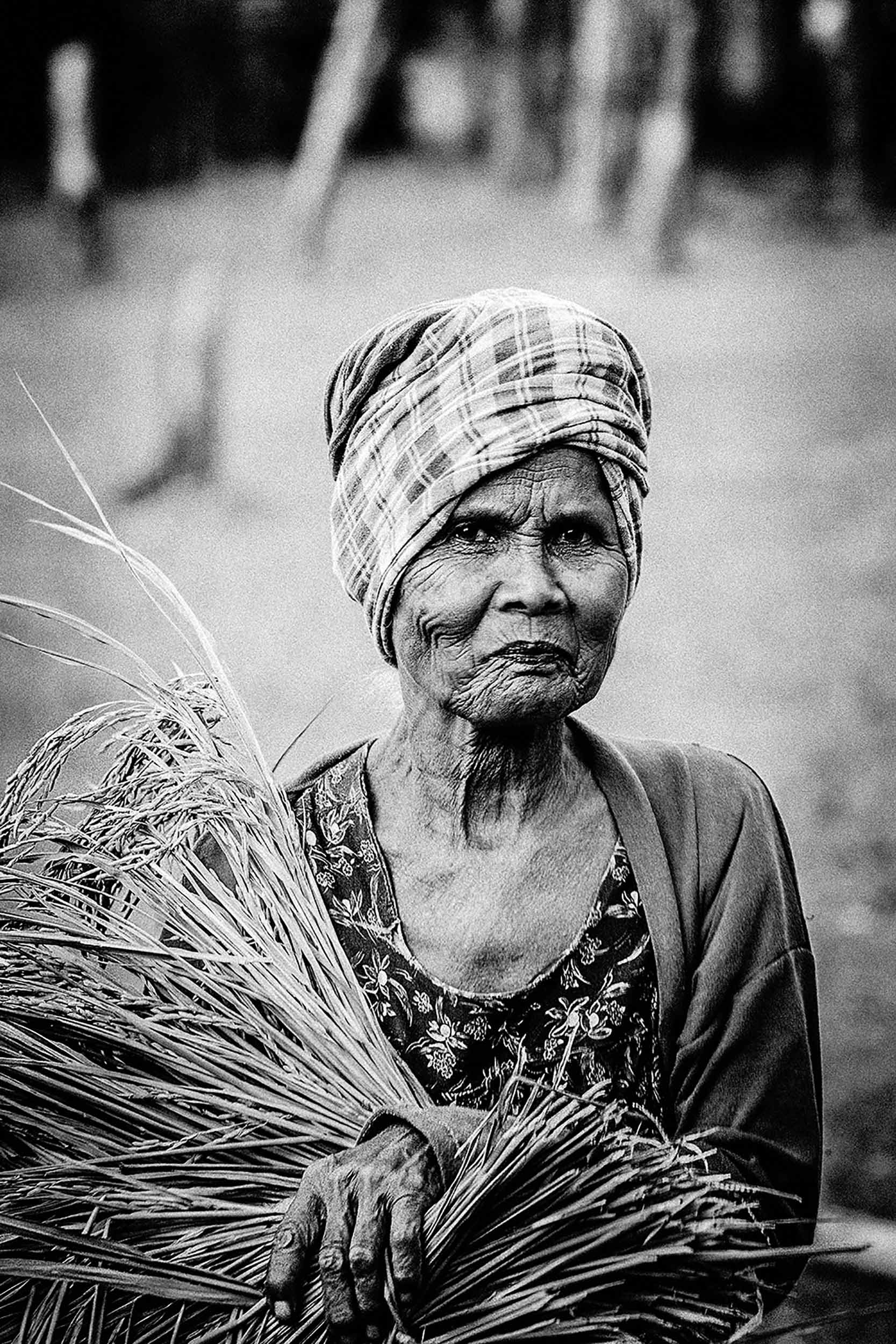 Rice harvesting Southern Laos