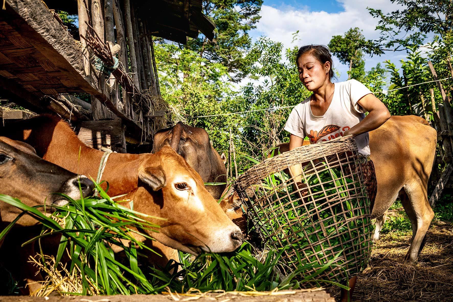 Lao Farmer