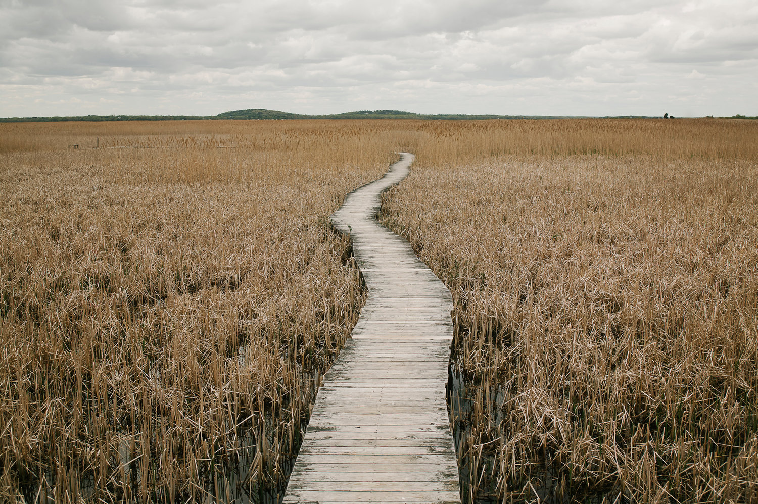 Boardwalk Through Marsh