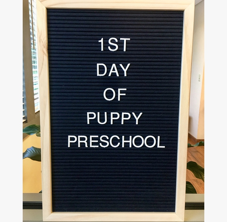 PuppyPreschool2018_Welcome.jpg