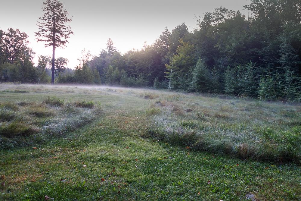 TI - Grasses in the Mist-5.jpg