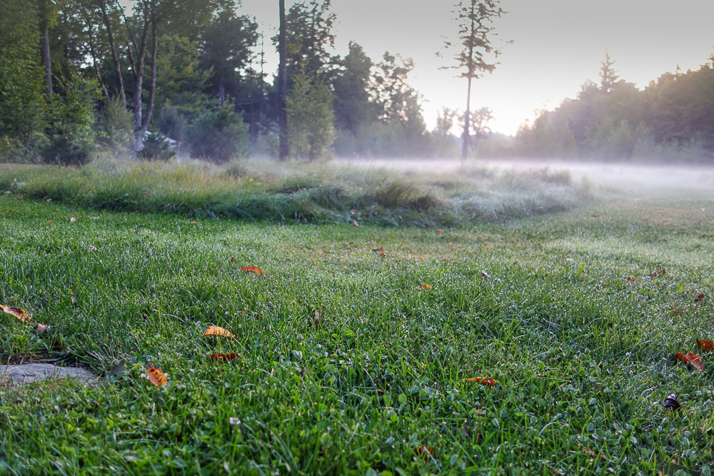 TI - Grasses in the Mist-4.jpg