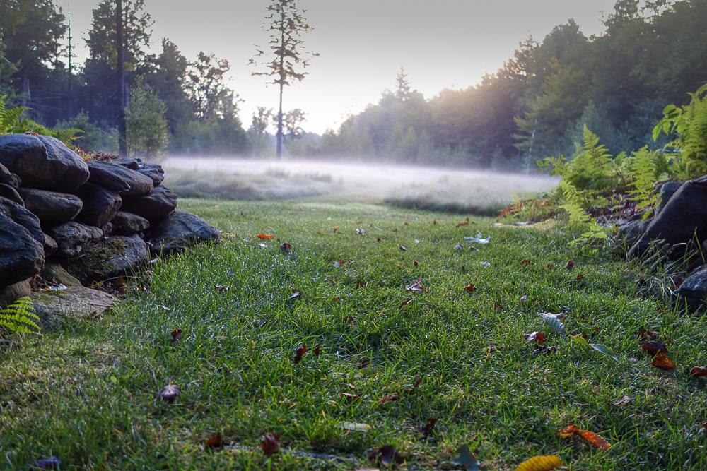 TI - Grasses in the Mist-2.jpg